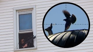 Shooting Pigeons from the Bathroom Window