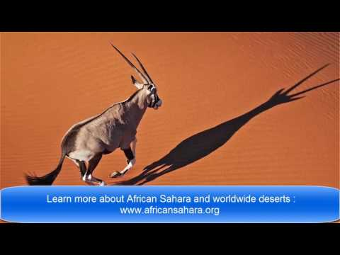 The Sahara : Here Is What You Should Know About This Amazing Desert of Africa