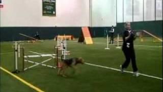 Agility Dog Training Chicago Pandk Exstdmccook.wmv