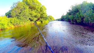 Не зря заехали в любимое место! Рыбалка на малой реке летом! Мошки, жара... спиннинг в забродку.