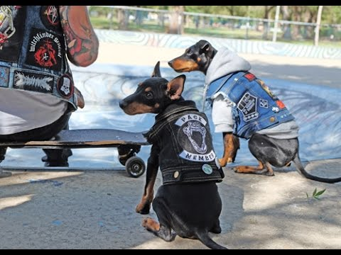 Metal Dogs, Skater Pups, It's a dogs life  by Pethaus