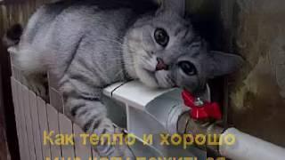 давольный кот на батарее
