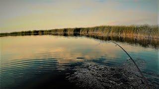 ЛОВЛЯ ЩУКИ НА РЕКЕ КОЛУТОН Рыбалка в Казахстане август 2021 учу сына ловить щуку