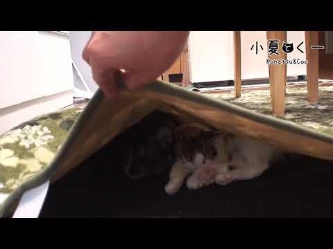 ホットカーペットを敷いた結果・・・ cat and carpet