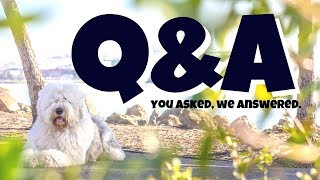 Q&A┃Old English Sheepdog┃Ed&Mel