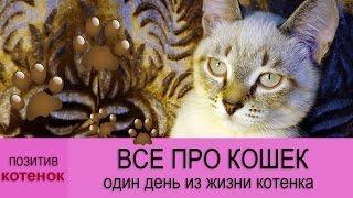 🐾 ВСЕ ПРО КОШЕК: Один день из жизни котенка!