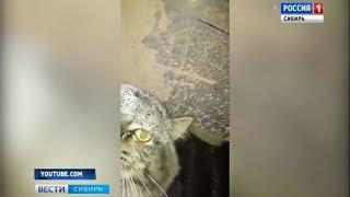 В Иркутске школьник и его мама спасли вмерзшего в лед кота
