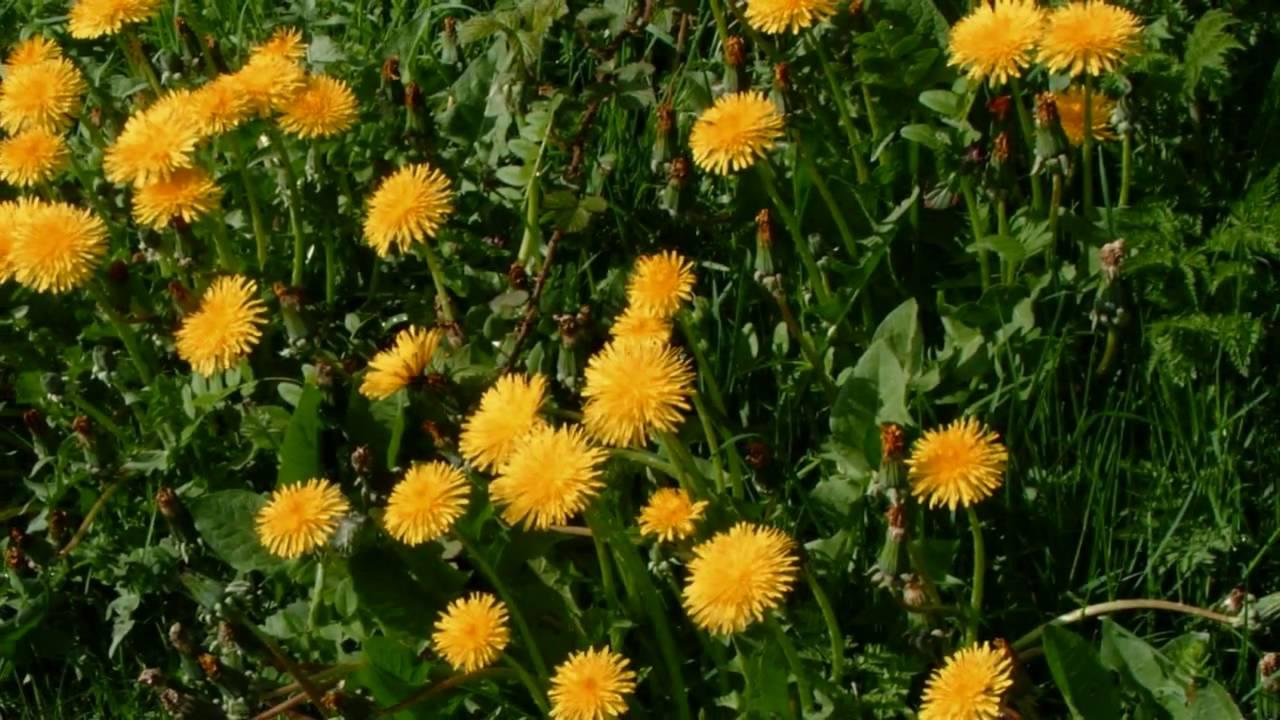 Common wild flowers of britain and ireland youtube mightylinksfo Images