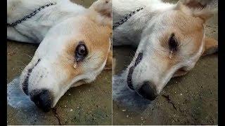 Chú chó bị đánh bả rơi nước mắt trước khi c.h.ế.t khiến bất cứ ai cũng phải xót xa