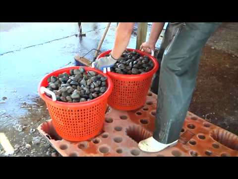 Cedar Key Clams: Fishermen Farming the Sea