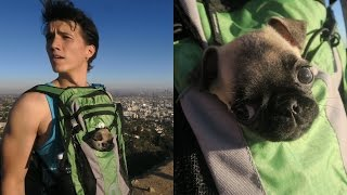 BABY PUGS FIRST INSANE HIKE!!