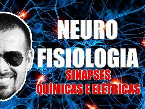 Sinapses Químicas E Elétricas - Sistema Nervoso - Neurofisiologia - VideoAula 083
