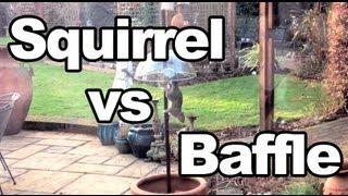 Squirrel Vs Anti-squirrel Baffle