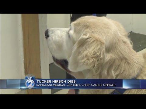 Beloved therapy dog Tucker Hirsch dies