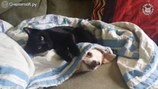 Коты бандиты и коты проказники