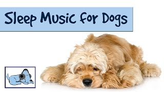 Music To Help Your Dog Get To Sleep At Night. Crate Training Solved With Relaxmydog.