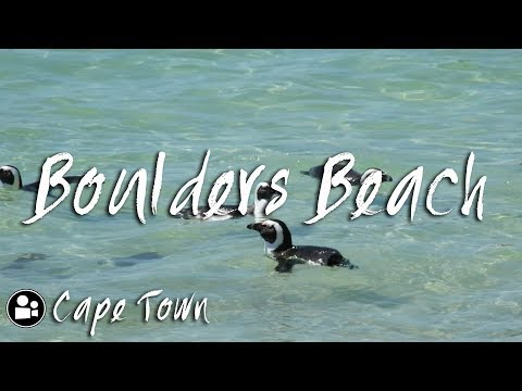 African Penguins at Boulders Beach, Cape Town Travel Guide