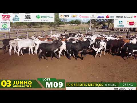 LOTE M09