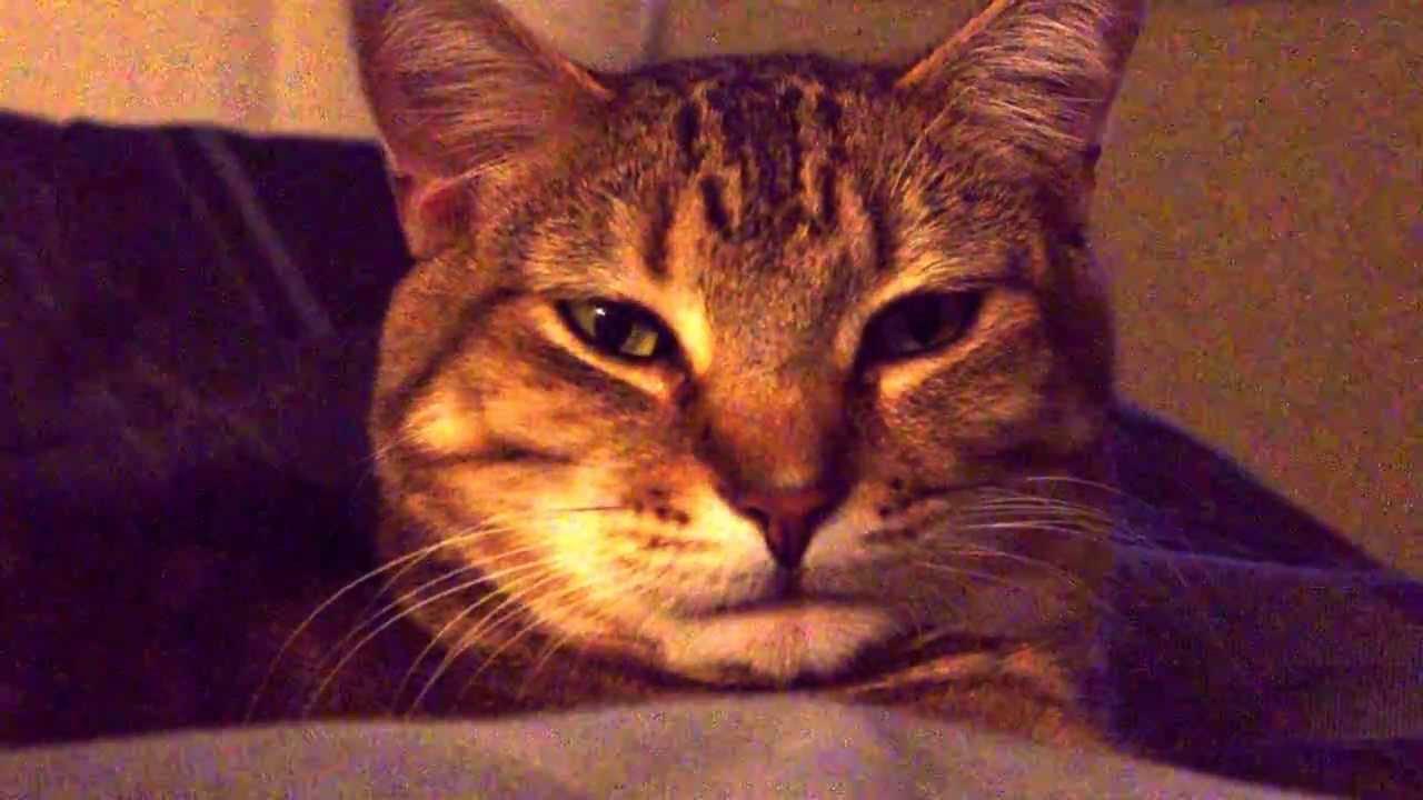 My Half Bengal Half Tabby Cat Sleeping Youtube