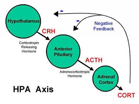 behavioral-epigenetics-|-wikipedia-audio-article