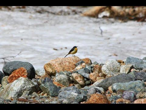 rivers&Birds   Healing music