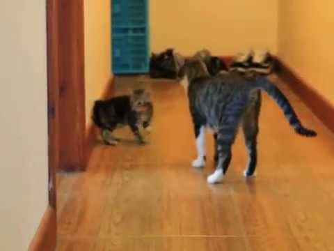 Cat Cleaning Kitten By Force