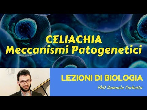 Celiachia - Meccanismi patogenetici di base - Lezioni di Biologia -