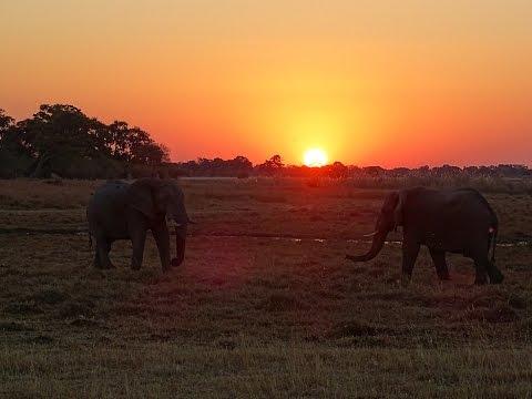 Drifters Botswana Safari Tour 2016