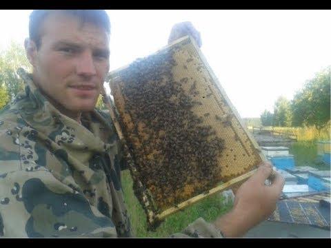 Брат адам. История пчелы