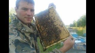 Заводчик пчелы Бакфаст. Пчеловод Беларуси Гращенко М. Отвечаем на вопросы по пчеловодству.