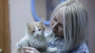 """Филиал для котят """"ДОМ МАЛЮТКИ"""" г.Тольятти"""