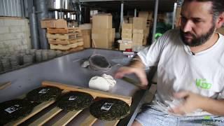 Прессуем наши блины пуэра. Лимитированная серия. Чайные заводы округа Линьцан.
