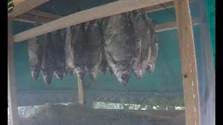 Сушилка для вяления рыбы
