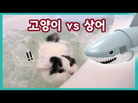 쵸비가 물에 빠졌다! 고양이 vs 상어