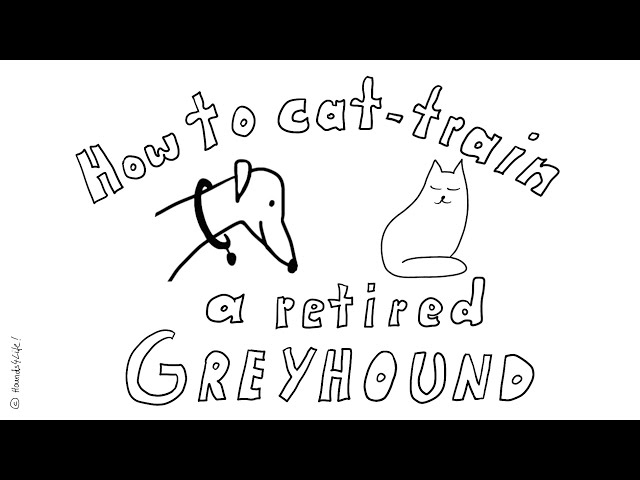 How to cat-train a retiered Greyhound!
