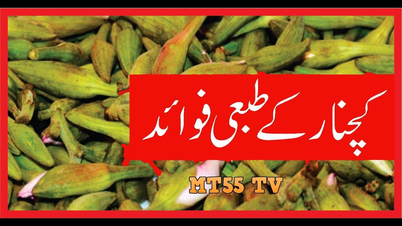 health benefits of eating kachnar in urdu hindi - youtube