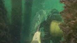 Nyborg Harbour - pillar diving under the big houses - Dykning i Nyborg under husene