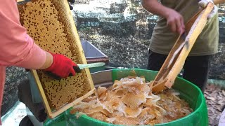 Harvesting Honey - Bee Master in Taiwan / 蜂蜜採收 - 台灣養蜂達人
