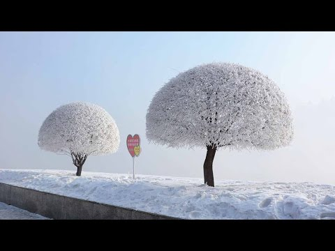 Winter Wonderland: Frost-covered scenery leaves northeastern China enchanted