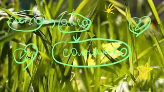 Немного дачной свежести летом, природа, #релакс ,моя дача,#дача,#лето,#karinaStar