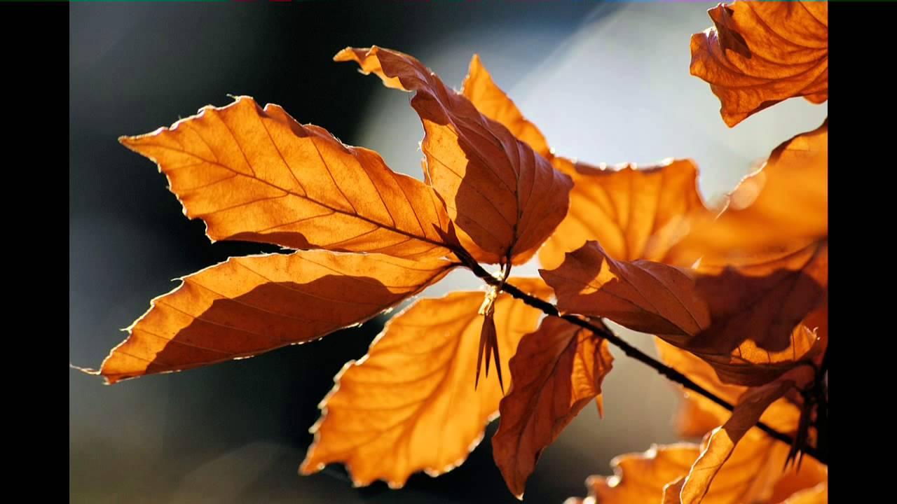 Der Herbst Steht Auf Der Leiter 1 Youtube