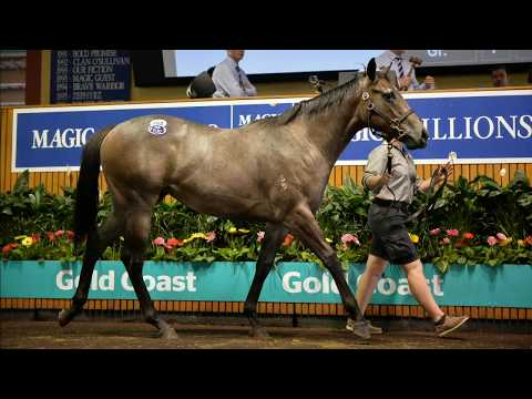2018 Gold Coast Yearling Sale - Day 5 (Live Stream Archive)