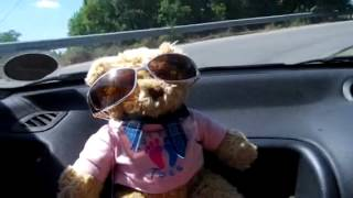 Bear hits the road
