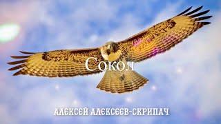Сокол - Алексей Алексеев-Скрипач