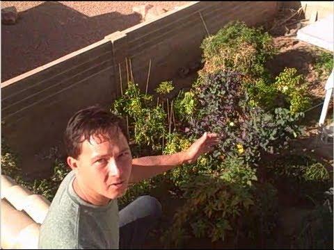 Winter Backyard Organic Vegetable Garden Tour in Las Vegas