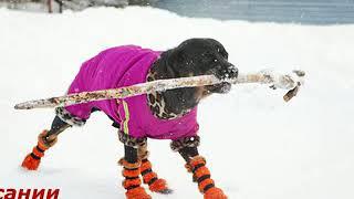 Обувь для собак оптом