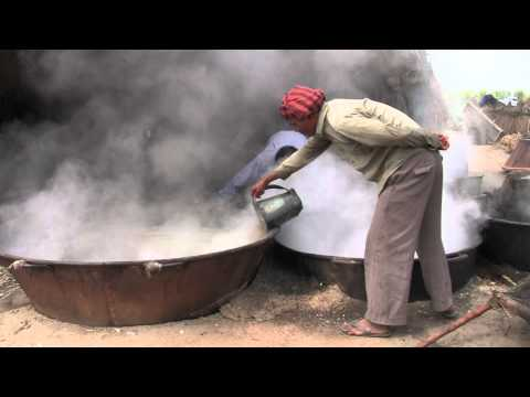 Making Fresh Jaggery in India