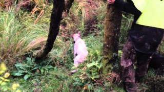 Weekend Pig Hunt