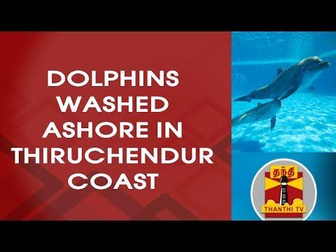 Dolphins Washed Ashore in Thiruchendur Coast | Thanthi TV