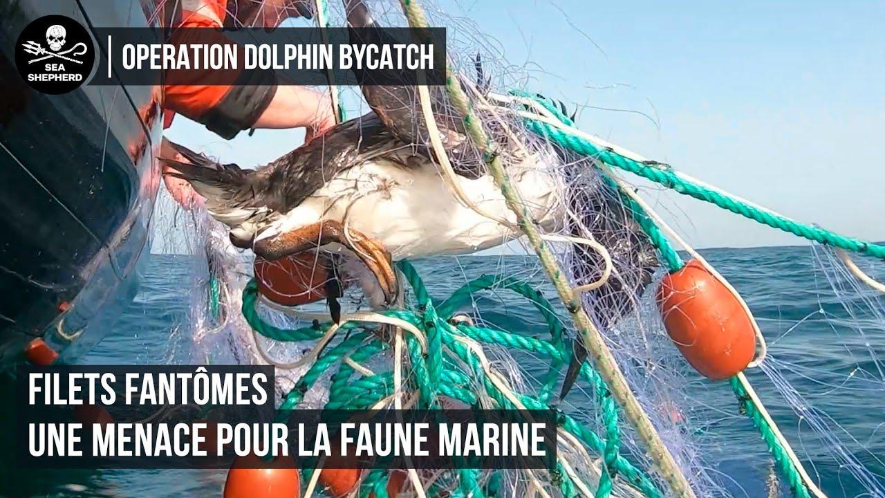 Quand la pêche transforme l'océan en terrain miné